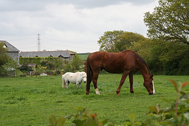 Horses and Converted Mine Buildings