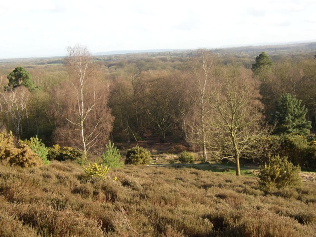 Hambledon Heath