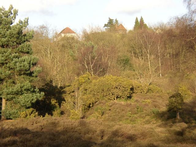 Hambledon Heath