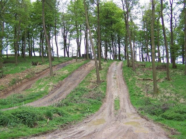 Corn Gauber Hill