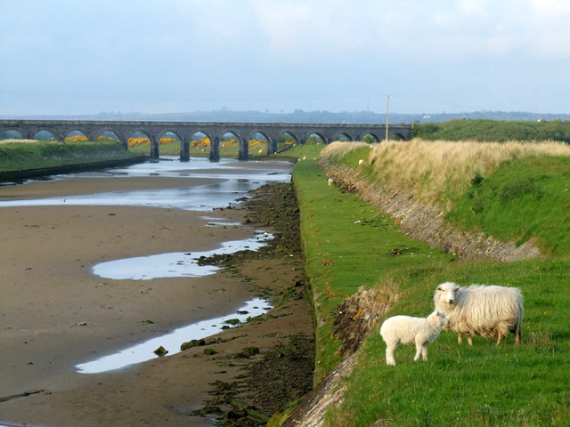A sheep and a lamb near the River Cefni