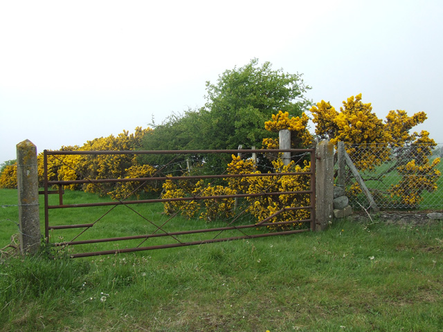 Gate into a field to the north of Llanddona