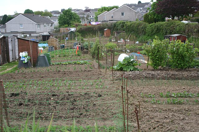 Allotment Gardens and New Housing Estate, Liskeard