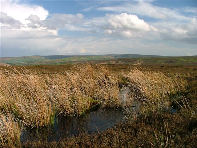 Pond, Skelderskew Moor