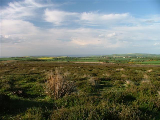 Moorsholm Moor