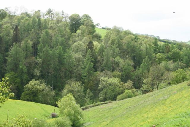 Bampton: near Doddiscombe