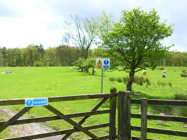 Pasture near Middlemoor Farm