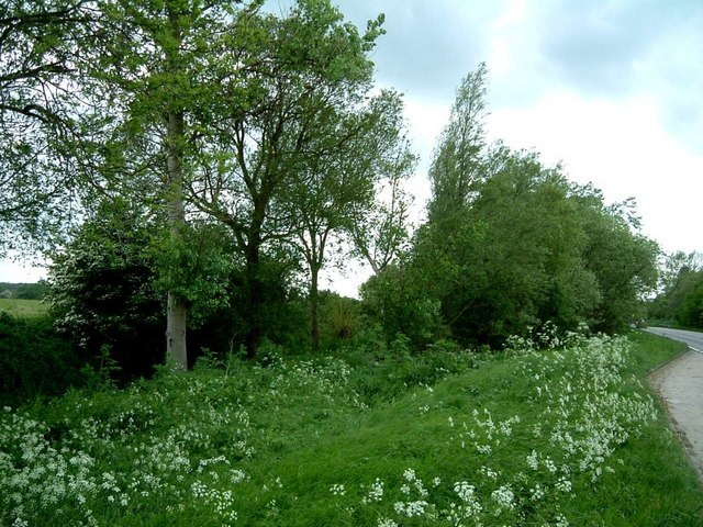 Wayside Willows & Poplars