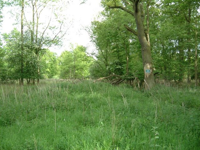 Kingshoe Wood