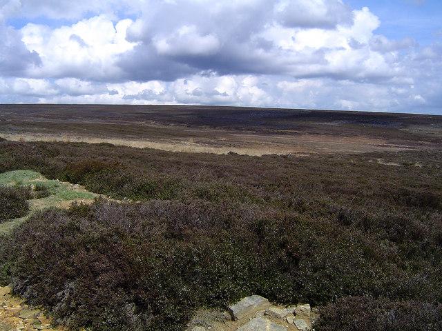 Spaunton Moor
