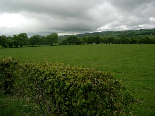 Pasture bounded by trees and hedge