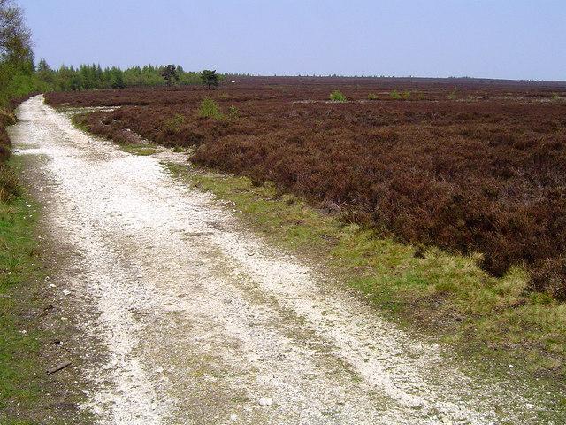 Rievaulx Moor