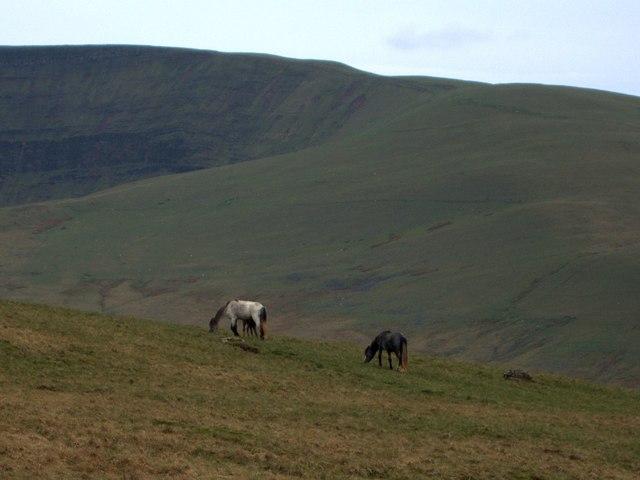 Horses on Cefn Disgwylfa