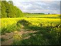 TL2923 : Benington by Nigel Cox