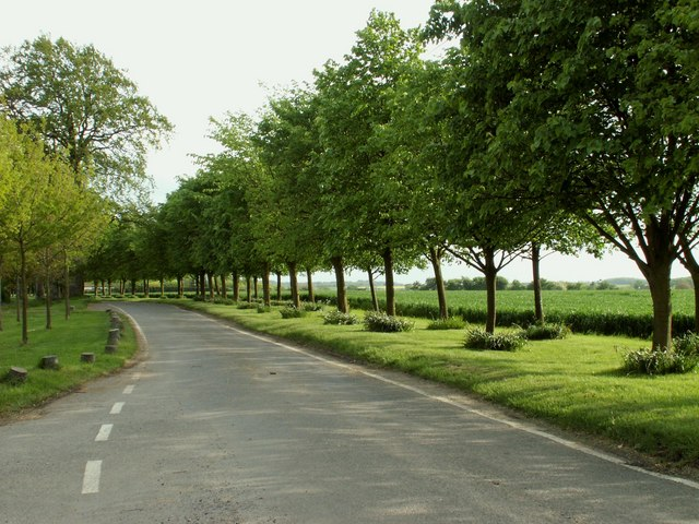 Country lane at White Roding, Essex