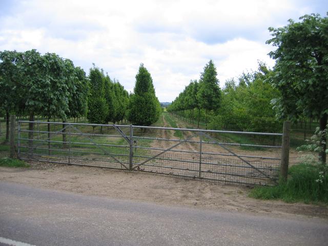 Tree nursery, Southill, Beds