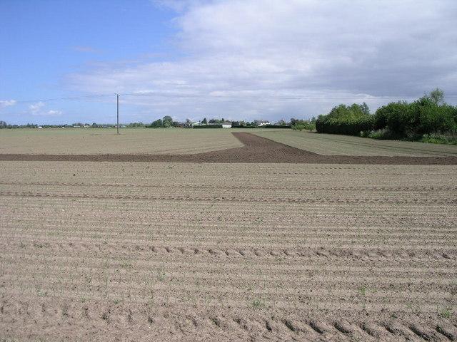 Stripy Field