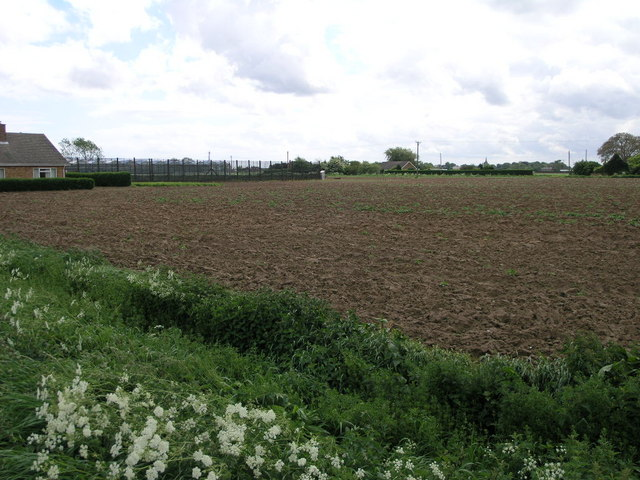 Windbreaks and Potatoes