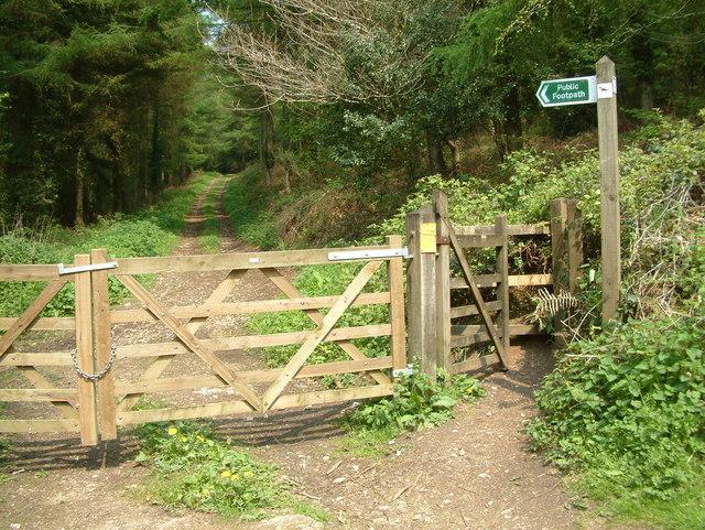 Footpath, Bovey Down, Devon