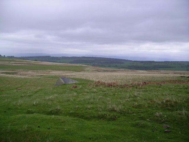 On Cockle Hill