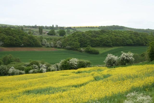 Fields at Dalton Parva
