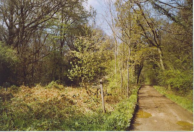 Bridleway through The Mens, Strood Green.