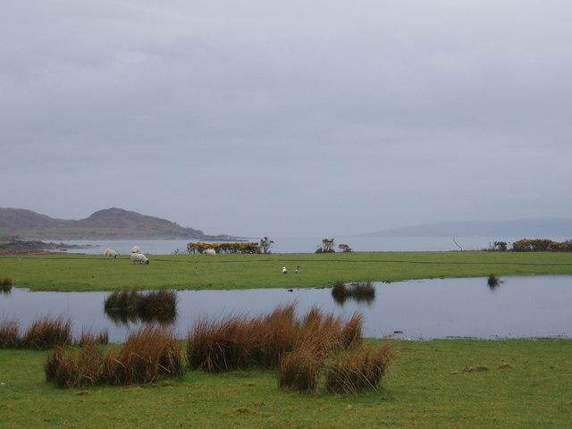 Sheep grazing at Inverguseran
