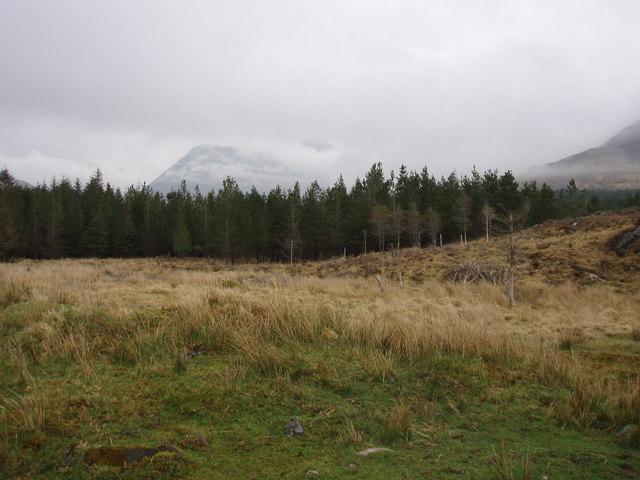 Forest on Knoydart