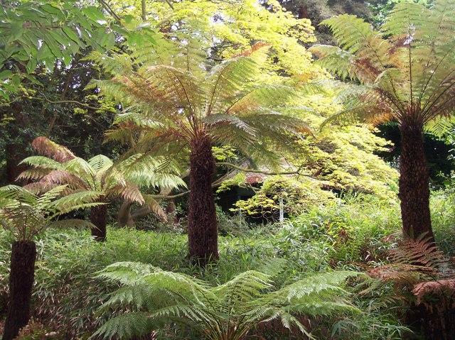 Exotic Ferns, Davenham, Malvern