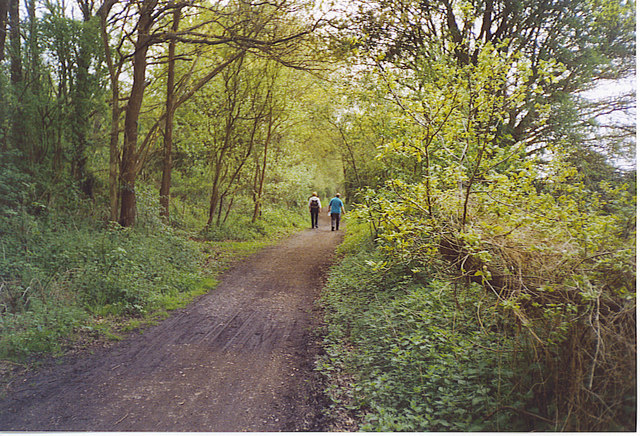 Walkers Heading Towards Cranleigh on the Downslink.