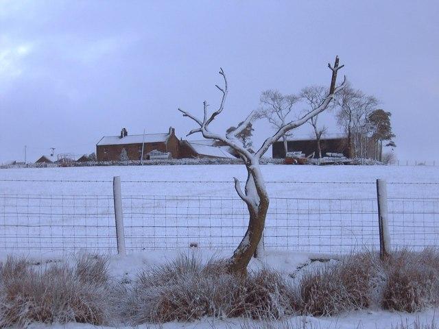 Black Hill Farm, near Hexham Racecourse