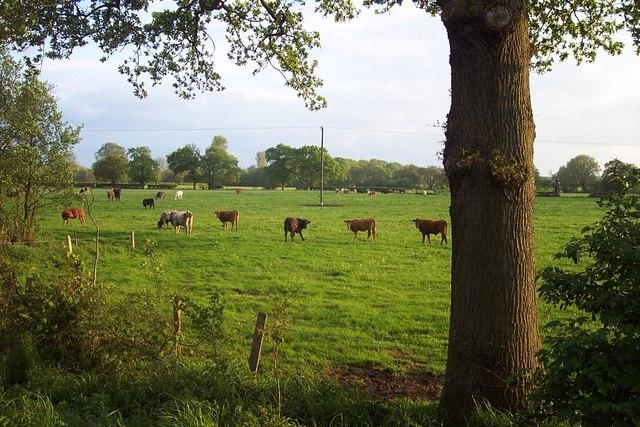 Field Near Great Bridgeford