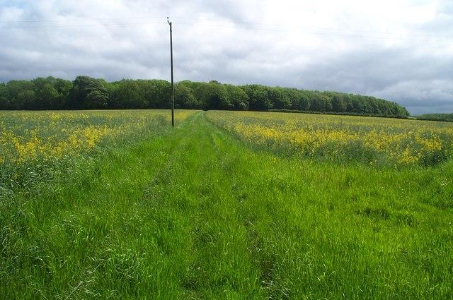 Great Plantation, near Stringston
