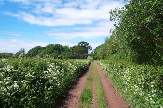 Track next to Honibere Wood, near Burton