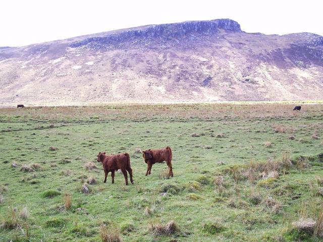Two Calves looking over towards Creag na Luibe Baine