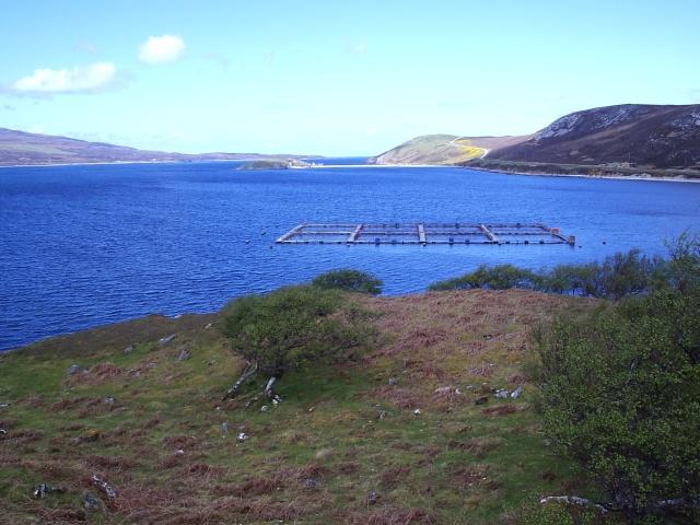 Loch Eriboll Fish Farm Cages
