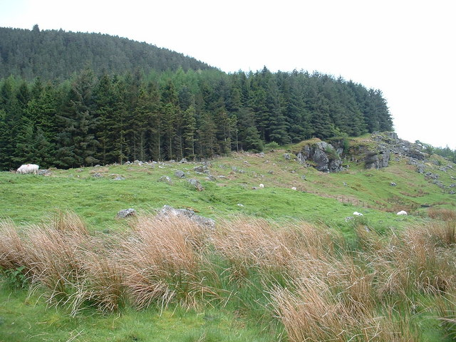 Forestry on Clogwyn Carrog