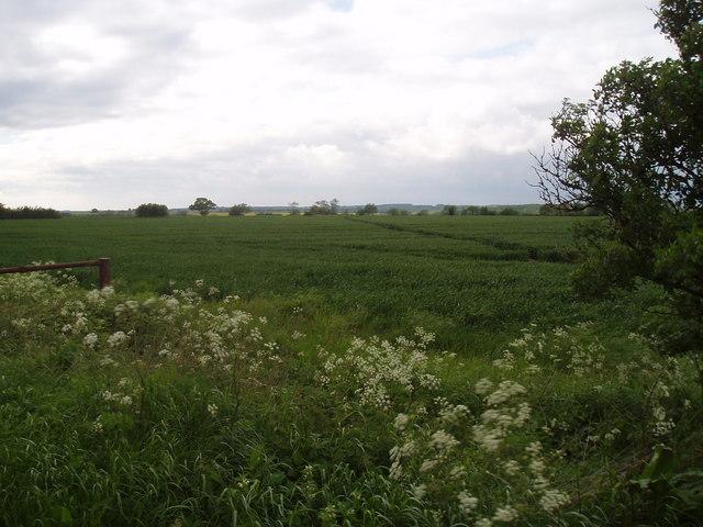 Paths through a field