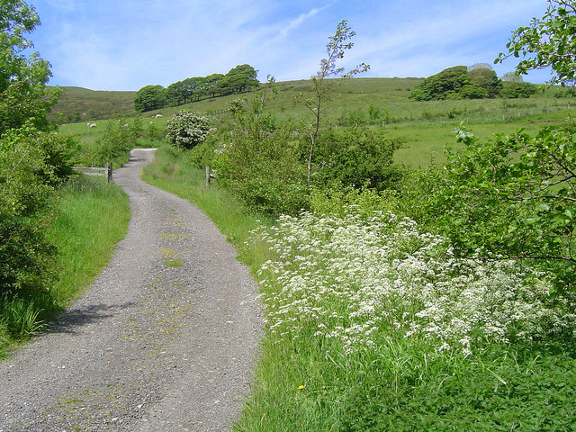 Country Lanes