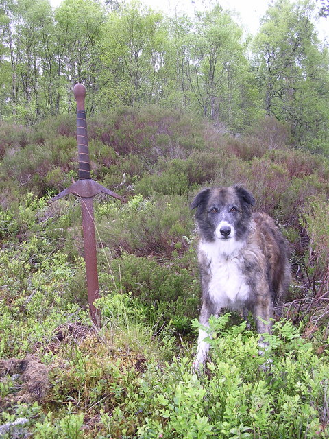 Claymore stuck in ground in remote area in Glen Affric