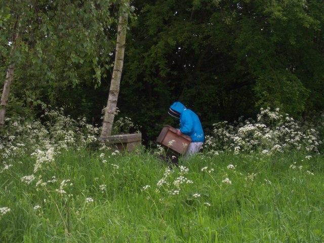 Beehives in Baughton