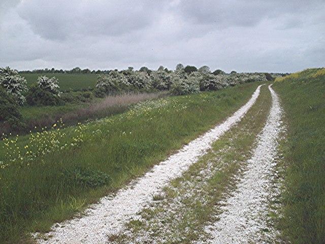 Hawthorns by the borrow dyke