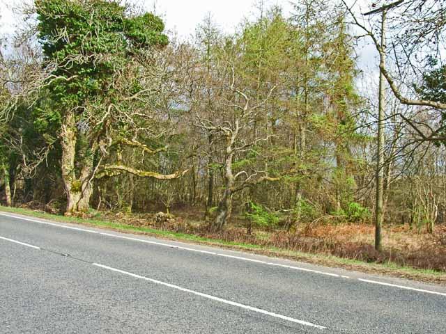 Woodland alongside the A75