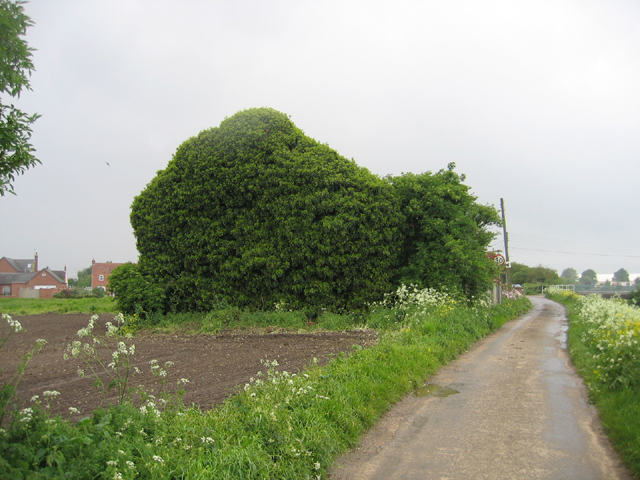 Ivy-covered house, Kirton Holme, Lincs