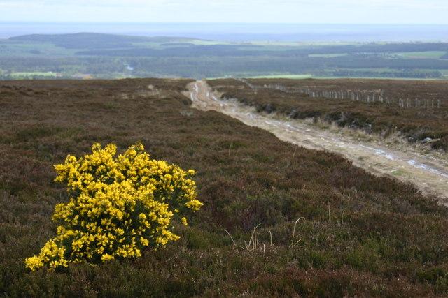 Track on Brown Muir