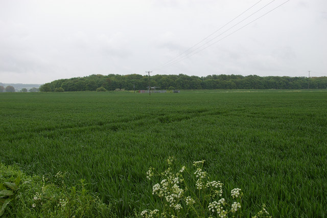 Looking towards Willow Plantation