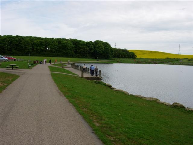 Pond in Herrington Country Park
