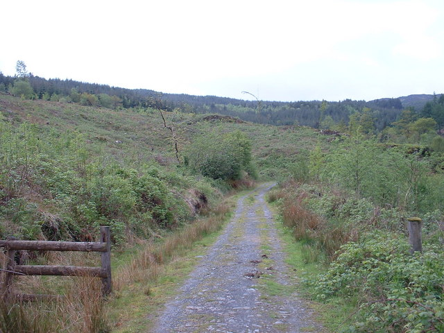 Forestry track above Ty Mawr