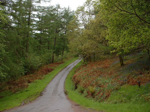 Road through the forestry above Penmachno