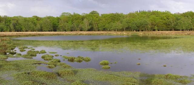 Starpole Pond, New Forest